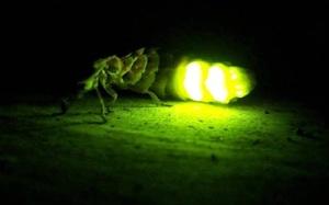 luciernagas brillando