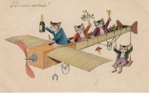 gatos en avioneta